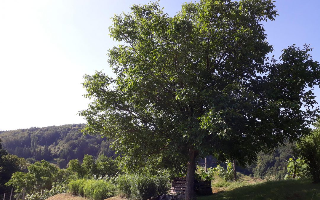 Tekačevo, Rogaška Slatina