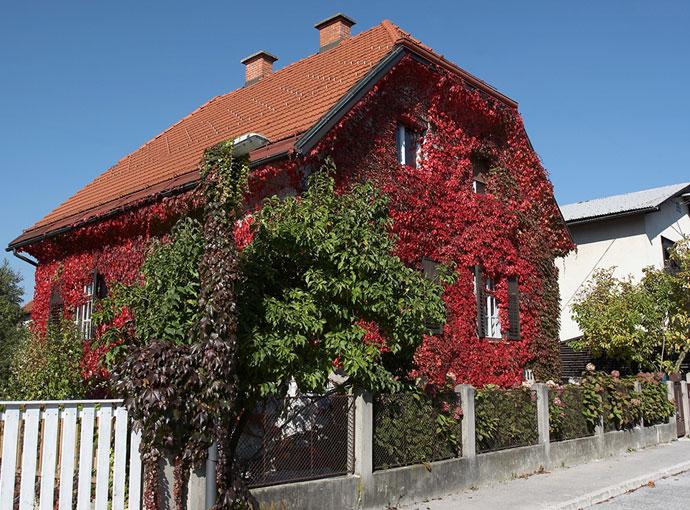 Naša hiša jeseni