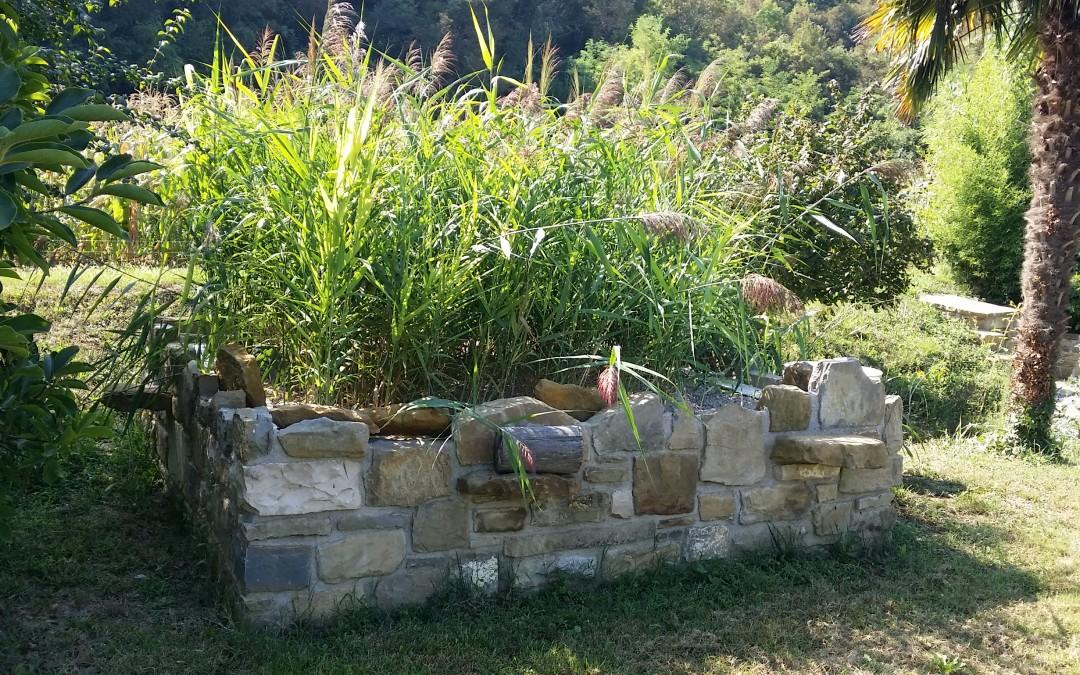 5 neresničnih mitov o rastlinskih čistilnih napravah