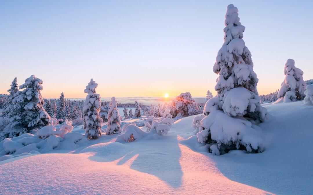 Delovanje rastlinskih čistilnih naprav (RČN) v zimskem času